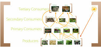 Dominant Plants Of The Tropical Rainforest - food web tropical rainforest biome