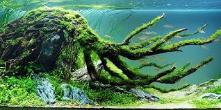 Mountain Aquascape Understanding Biotope Aquascaping Style The Aquarium Guide