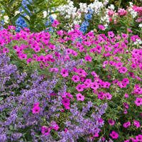 Usa Garden Zones - hardiness zones in the usa