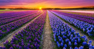 Images Of Landscapes by Colorful Landscapes Photo Contest Viewbug Com