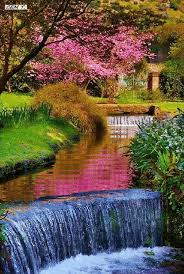 805 best garden images on pinterest plants flowers and gardens