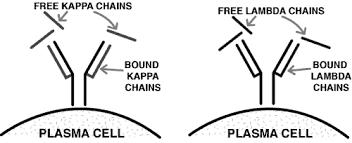 difference between kappa and lambda light chains monoclonal gammopathies