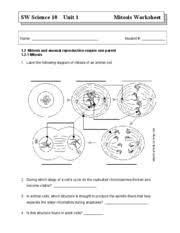 mitosis worksheet chromosomes 2 sister chromatids shorten iii
