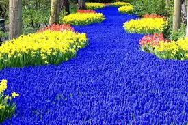blue flowers blue flowers garden blue flower plants pictures autouslugi club