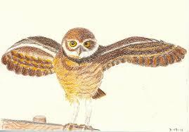 owl búho darshan helens22 u0027s weblog