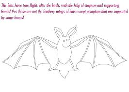 mammals coloring pages flying mammal coloring pages