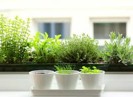 Kitchen Windowsill Three Herb Pots