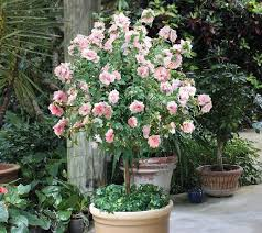 95 best gardens courtyards patios gigs images on pinterest