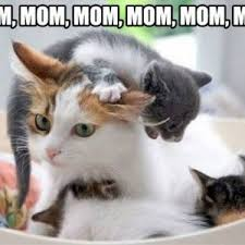 Cute Kitty Memes - mothers day meme cute cute cats pinterest meme cat and dog