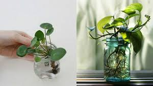Plants That Need Low Light You Should Have This In Your Home Plant That Brings Health And