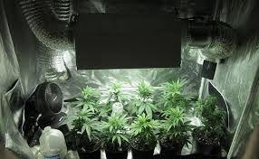 building your own grow room