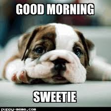 Good Morning Funny Meme - cutest good morning sweetie memes images quotes pinterest