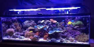 Led Aquarium Lighting Beamswork Led Aquarium Light The Aquarium Guide