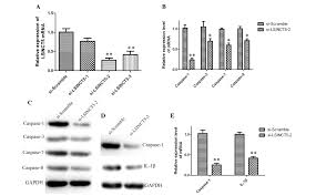 bnp si e social increased b type natriuretic peptide promotes myocardial cell
