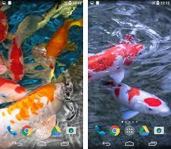 koi live wallpaper version apk free koi live wallpaper apk version 2 0 lyx