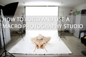 home photography studio how to build and use a macro photography studio discover digital