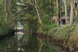 simple houses and their gardens line the canals picture of