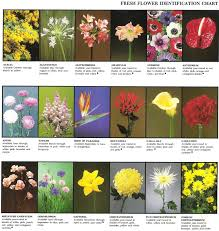 how to identify a flower by picture best plant identification apps