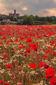 best 25 poppy fields ideas on pinterest fields sunsets and
