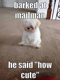 Cute Puppies Meme - barked at the mailman funny cute memes adorable dog pets meme lol
