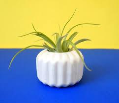 hardy houseplants that double as low maintenance decor