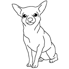coloring pages chihuahua puppies chihuahua dog posing coloring pages netart