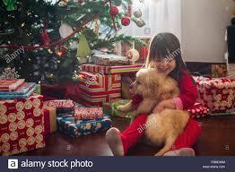 hugging golden retriever puppy at stock photo