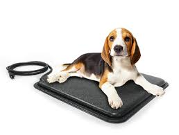 Dog Kennel Flooring Outside by Keeping Your Dog Warm Kennel Floor Heaters And Other Options