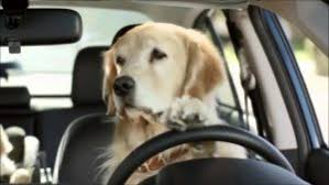 Dog In Car Meme - dog memes funny collection of dog pictures