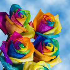 wholesale roses all flowers at wholesale pricing global
