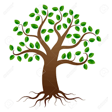 green tree with roots on white background royalty free cliparts