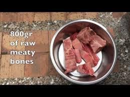 rottweiler diet raw meaty bones youtube