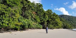 The Beach House Cape Tribulation by Cairns Eco Friendly Hotels Tours Activities For Smart City Travelers