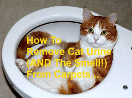 How Do You Get The Urine Smell Out Of Carpet 25 Unique Cat Urine Remover Ideas On Pinterest Cleaning Cat