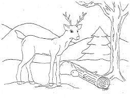 coloring marvelous coloring pages deer family coloring