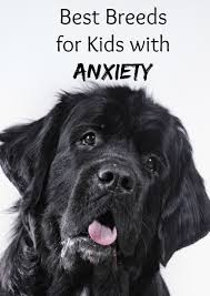best dog breeds for kids with anxiety dog breeds children s and dog