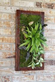 12 best bromeliad living wall images on pinterest vertical