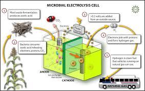 curiocity curiocité microbial fuel cells making electricity