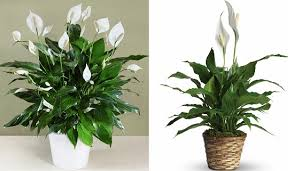 Plants For Office Biophilic Design And The Best Plants For Your Office Verhalen Inc