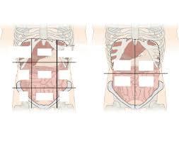 Abdominal Anatomy Quiz Abdominopelvic Regions Quiz