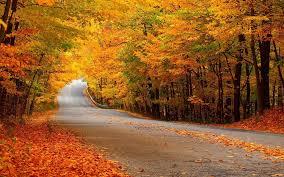 autumn nature download hd desktop wallpapers 4k hd