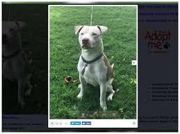 Free Advice Profitable Dogs Xl Rescue
