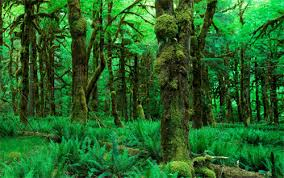 Deep Forest Green 32 Breathtaking Forest Wallpaper For Your Desktop Naldz Graphics