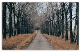 trees along a country road 4k hd desktop wallpaper for 4k ultra
