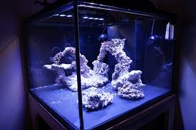 Reef Aquascape Designs Tips And Tricks On Creating Amazing Aquascapes Page 5