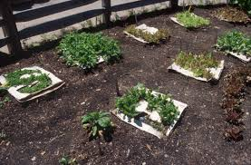 theme gardens natural learning initiative