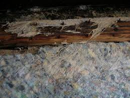 mold inspections and mold problems