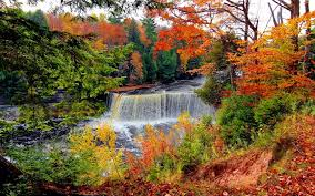 waterfalls nature leaves water branches beautiful autumn waterfall