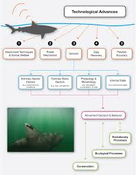 electronic tagging and tracking marine animals supports