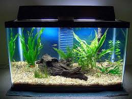 where to put fish tank search diy crafts